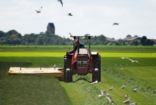 Boer op land - FrieslandStock