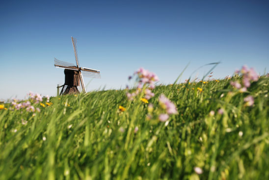 Doris Mooltsje in voorjaar tafereel - FrieslandStock