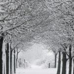 091211 Bomenrij in winter