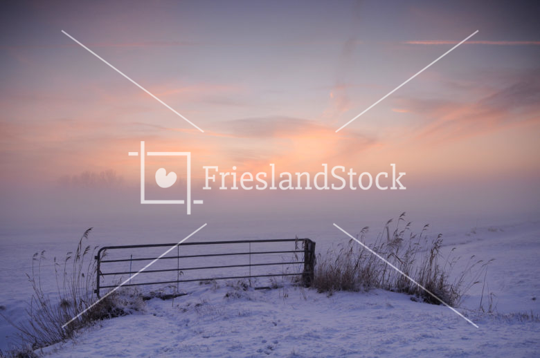Hek in winters weiland - FrieslandStock