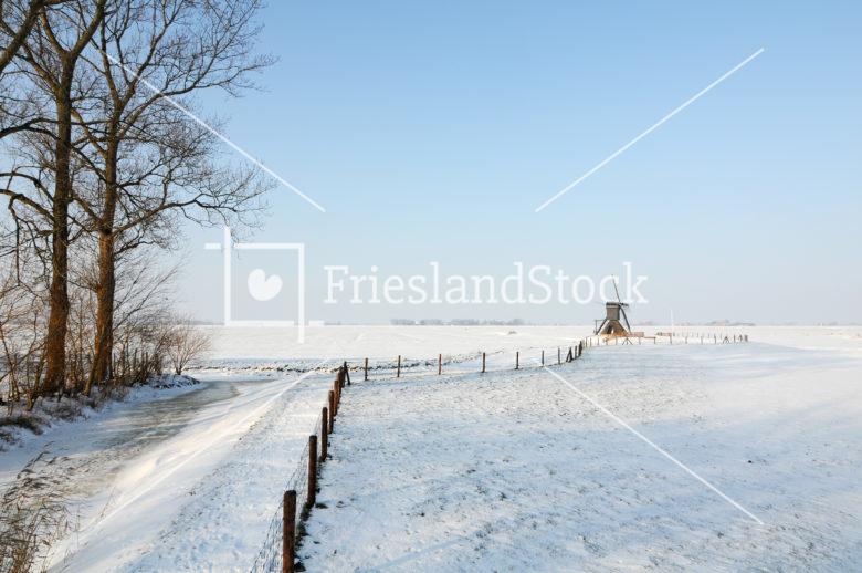 Molentje van Nijhuizum - FrieslandStock