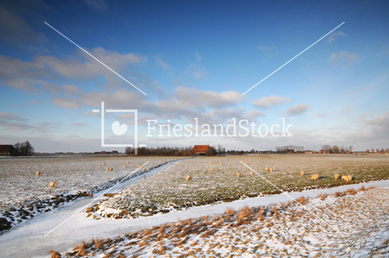Winters landschap bij Abbega - FrieslandStock
