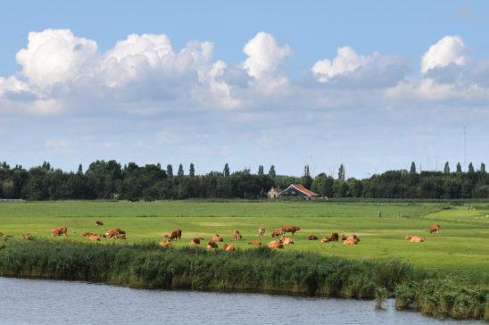 Weiland met zicht op Stavoren - FrieslandStock