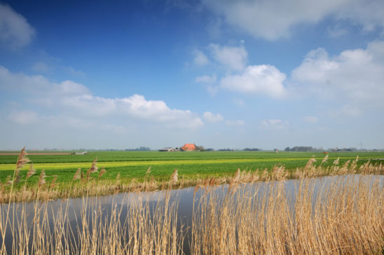 Landschap bij Workum - FrieslandStock