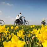 Fietsers in landschap - FrieslandStock