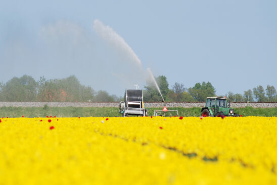 Tulpenvelden sproeien nabij Hindeloopen - FrieslandStock