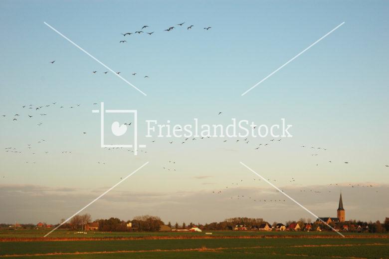 Workum - FrieslandStock