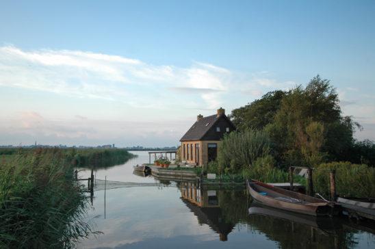 Sypset - FrieslandStock