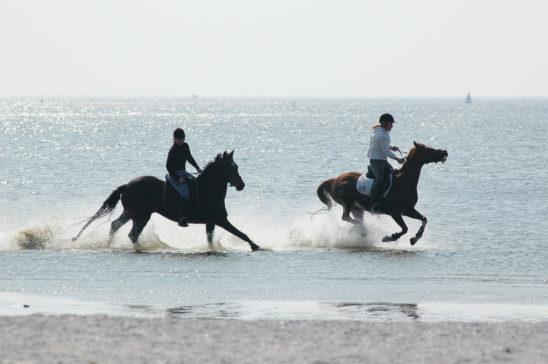 Paardrijden op strand van Workum - FrieslandStock
