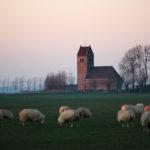 Westhem - FrieslandStock