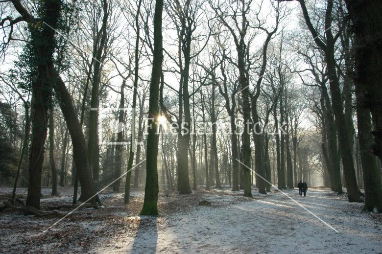 Wandelaars in bos Gaasterland - FrieslandStock