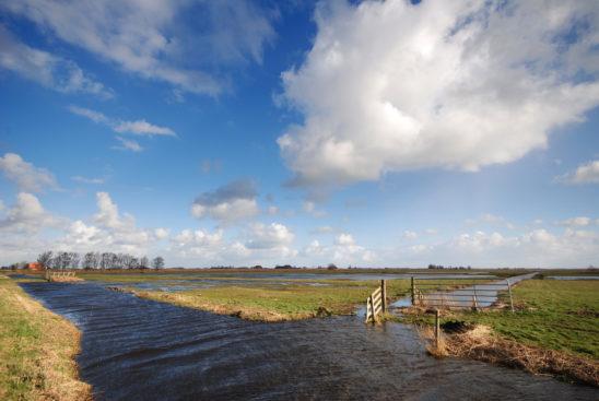 Heidenskip - FrieslandStock