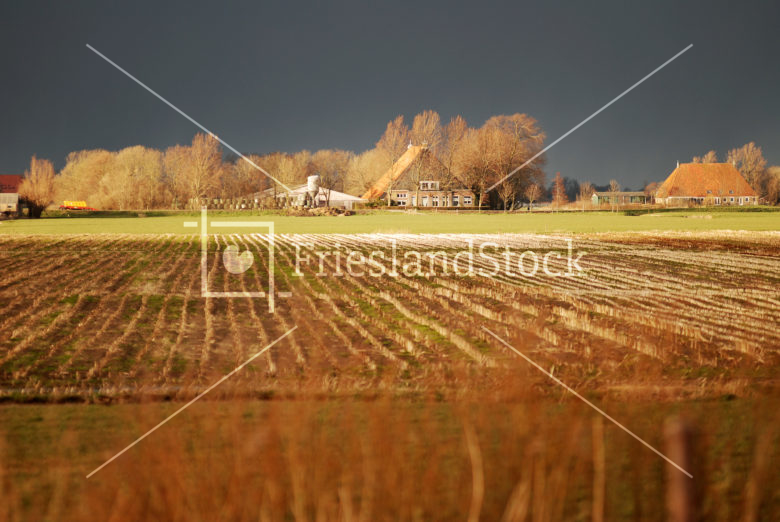 Boerderij nabij Westhem - FrieslandStock