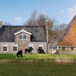 Friese paarden bij boerderij - FrieslandStock