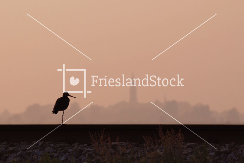 Kievit op spoorrails - FrieslandStock
