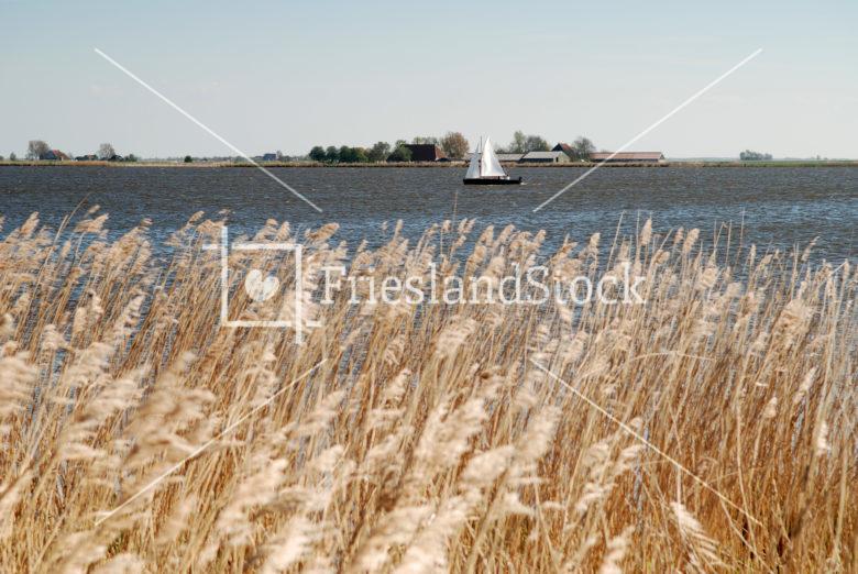 Vroege zeiler op Oudegaasterbrek - FrieslandStock