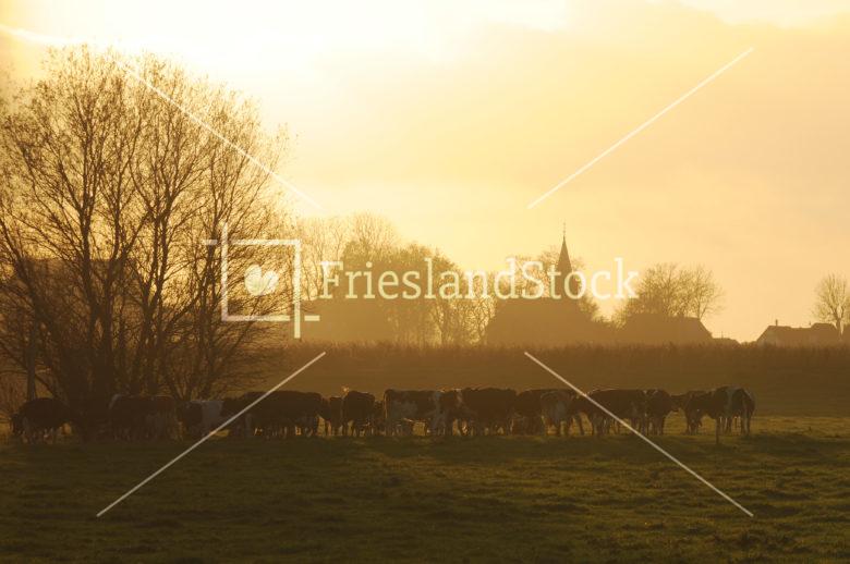 Koeien in zonsondergang nabij Idsegahuizum - FrieslandStock