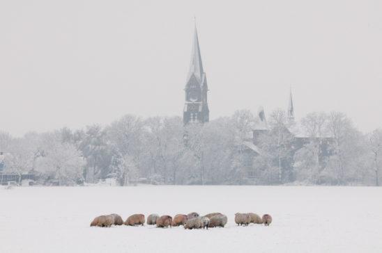 Blauwhuis in de winter - Friesland