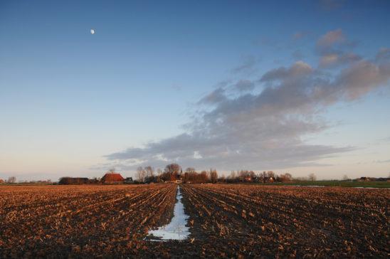 Reahus - FrieslandStock