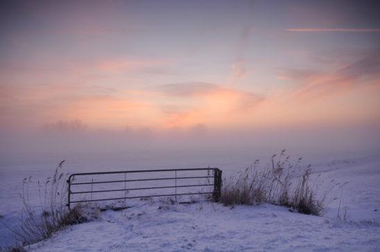 Hek in winters weiland - FrieslandStock