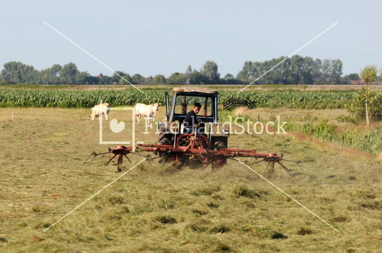 Boer in weiland - FrieslandStock