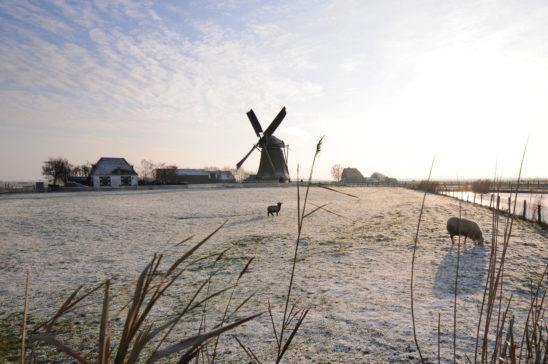 Molen Workum - FrieslandStock