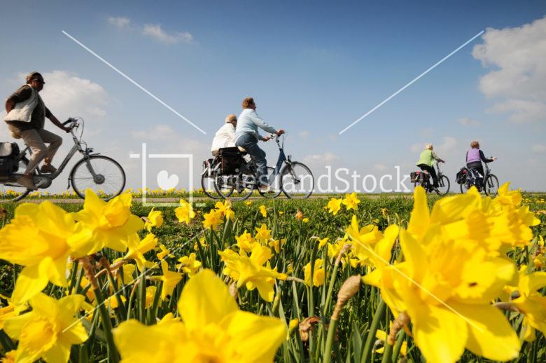 Fietsers in landschap - FrieslandStock