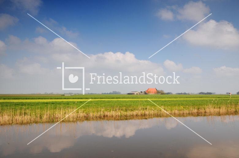 Weiland met sloot en boerderij - FrieslandStock
