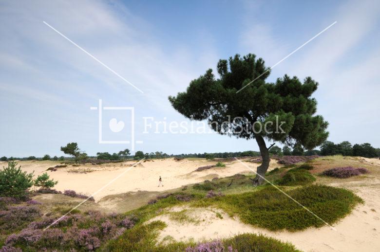 Aekingerzand nabij Elsloo - FrieslandStock
