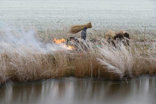 Riet branden nabij Gaast - FrieslandStock