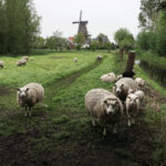 190501 Zicht op molen De Zwaluw van Burdaard