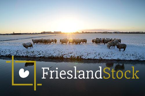 frieslandstock-nieuwsbericht